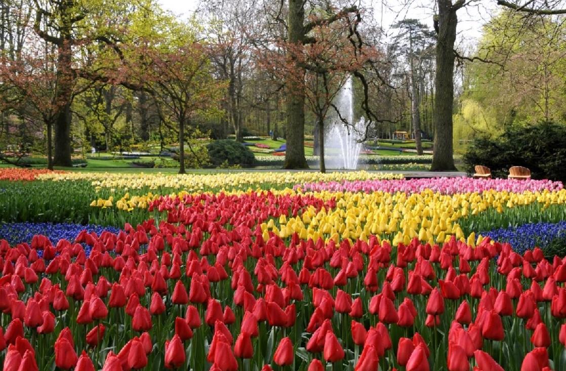 2019 花現荷蘭~荷比法雙宮傳奇、羊角村、鬱金香花園綻放九日