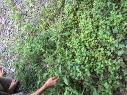 suiis專欄:喝西北風過日子的人。台東關山的自然飲食。~suiis素易