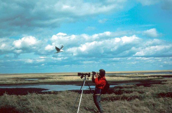 生態攝影師