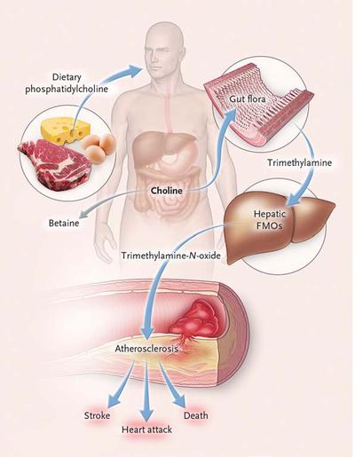 [蔬食與健康]腸道細菌代謝奶蛋魚的卵磷脂明顯增加心血管疾病風險:suiis專欄